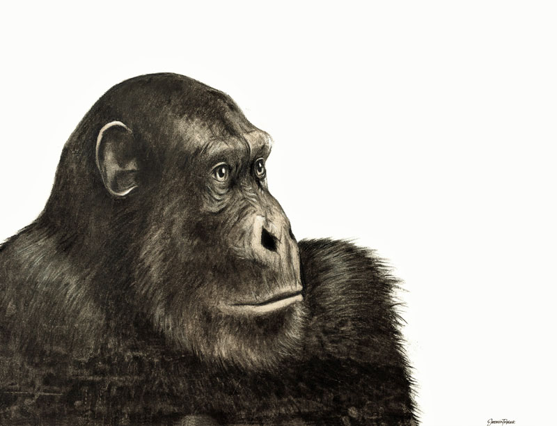 Student artwork on display in Advising Center - in this case, a drawing of a thoughtful chimp